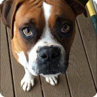 Adopt A Pet :: Watson - Reno, NV