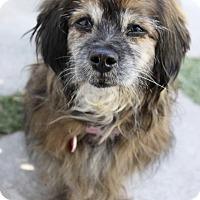 Adopt A Pet :: Bonnie Brindle - Los Angeles, CA