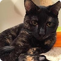 Adopt A Pet :: Shelly - East Hanover, NJ