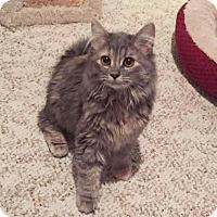 Adopt A Pet :: Maddie - Arlington/Ft Worth, TX