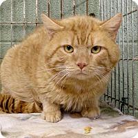 Adopt A Pet :: Dave - Marlinton, WV