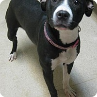 Adopt A Pet :: Libby - Gary, IN