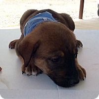 Adopt A Pet :: Frankie - Trenton, NJ