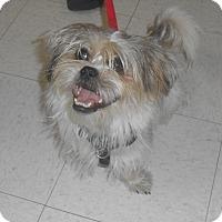 Adopt A Pet :: Roper - Lockhart, TX