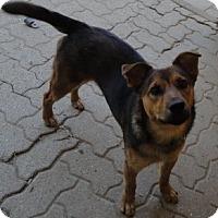 Adopt A Pet :: Checkers - Bedford, TX