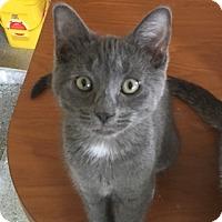 Adopt A Pet :: Macaroni - Tiffin, OH