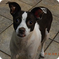 Adopt A Pet :: Coco(12 lb) AWESOME Girl! - SUSSEX, NJ