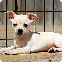 Adopt A Pet :: Nova (Pending) - Bristol, CT
