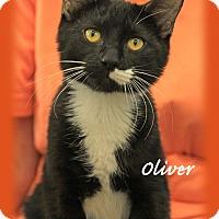 Adopt A Pet :: Oliver - Waterbury, CT