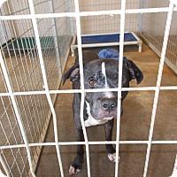Adopt A Pet :: Ayers - Lewisburg, TN