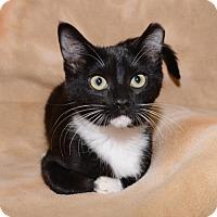 Adopt A Pet :: Boots - Salt Lake City, UT