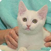 Adopt A Pet :: Martin - Reston, VA