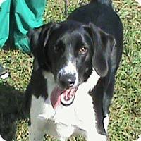Pointer Mix Dog for adoption in Maynardville, Tennessee - Freya