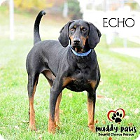 Adopt A Pet :: Echo - Council Bluffs, IA