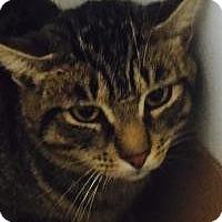 Adopt A Pet :: Trey - Manchester, NH