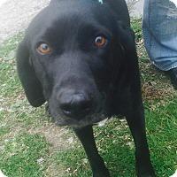 Adopt A Pet :: Birdie - waterbury, CT