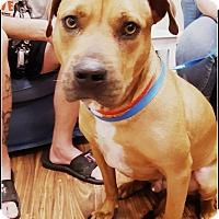 Adopt A Pet :: Briles - Calgary, AB