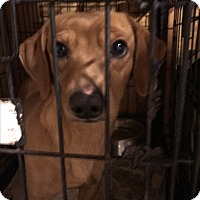 Adopt A Pet :: Dallas - Denver City, TX