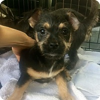 Adopt A Pet :: Frannie - Rocky Hill, CT