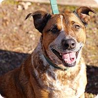 Adopt A Pet :: Darla - Mount Laurel, NJ