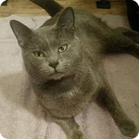 Adopt A Pet :: Blue - Savannah, GA