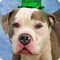 Adopt A Pet :: BARD - Louisville, KY