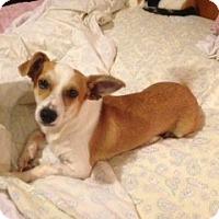 Adopt A Pet :: Whisky - Hazard, KY