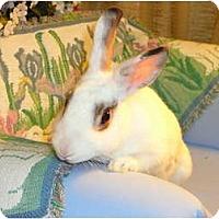 Adopt A Pet :: Gia - Newport, DE