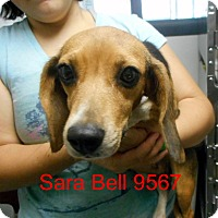 Adopt A Pet :: Sara Bell - baltimore, MD
