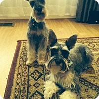 Adopt A Pet :: Skoti and Pepper-News! - Laurel, MD