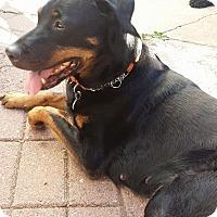 Adopt A Pet :: Roxy - Surrey, BC
