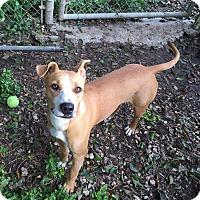 Adopt A Pet :: Valentina - Key Biscayne, FL