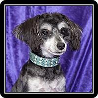 Adopt A Pet :: Haley - San Diego, CA