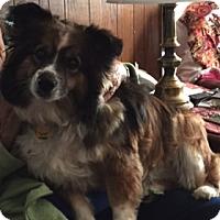 Adopt A Pet :: Nora - Elk River, MN