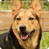 Adopt A Pet :: Zoey-Bea - Nashville, TN