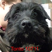 Adopt A Pet :: Tonto - baltimore, MD