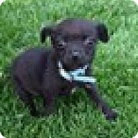 Adopt A Pet :: Toodles - Beavercreek, OH
