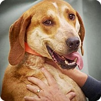 Adopt A Pet :: Mark - Lincolnton, NC