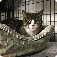 Adopt A Pet :: Stella - North Kingstown, RI
