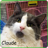 Adopt A Pet :: Claude - Warren, PA