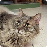 Adopt A Pet :: Smokey - Elyria, OH