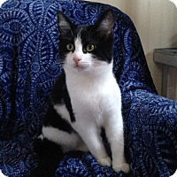 Adopt A Pet :: Xenia - Nashville, TN