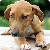 Adopt A Pet :: Jimbo - Waldorf, MD