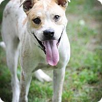 Adopt A Pet :: Toby~ meet me! - Glastonbury, CT