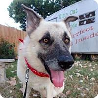 Adopt A Pet :: Jackson - Austin, TX