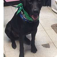 Adopt A Pet :: Brody - Maryville, IL