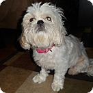 Adopt A Pet :: Lacey (COURTESY POST)