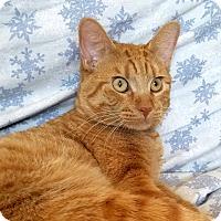 Adopt A Pet :: Judge Joe Brown - Addison, IL