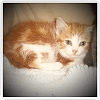 Adopt A Pet :: AKINA - Medford, WI