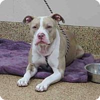 Adopt A Pet :: TAYLOR - Springfield, MA